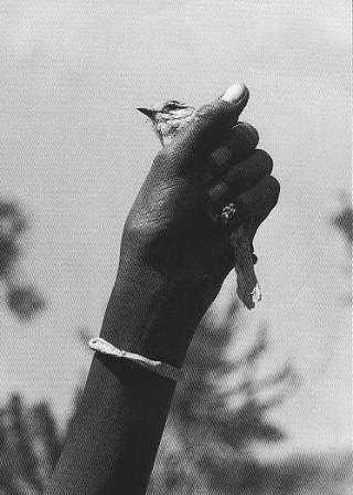 medium_Oiseau.2.JPG