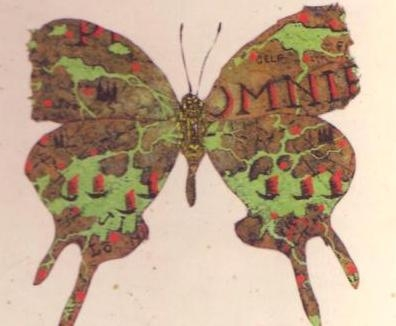 Papillon0001.JPG