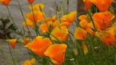 fleurs-jaunes.jpg