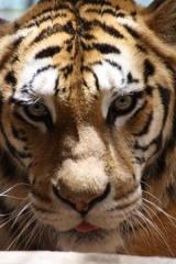 zoo-du-belvedere.jpg