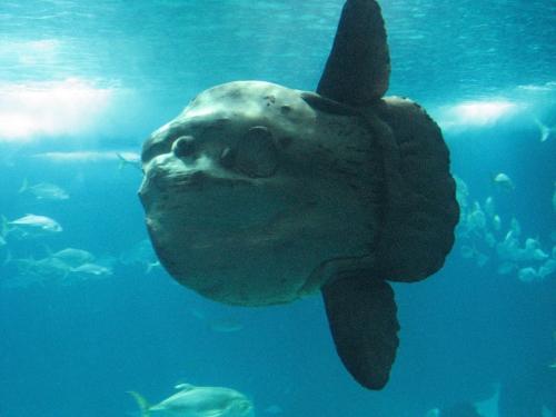 poisson-lune-lisbonne-aquarium-vasco-de-gama.jpg