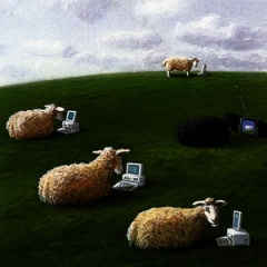 MichaelSowa-sheepwithlaptops-S.JPG