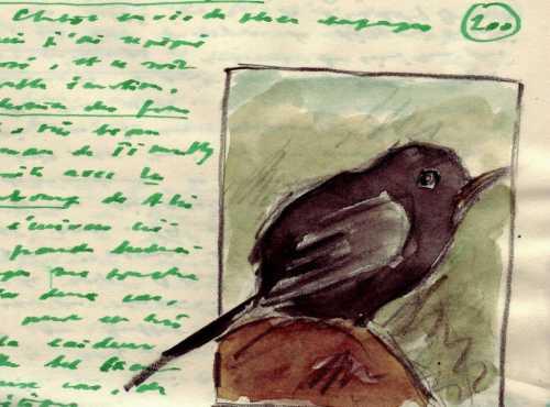 Oiseau0001.JPG