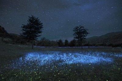 lucioles2.jpg