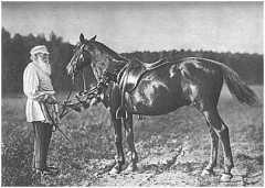 Tolstoi3.jpg