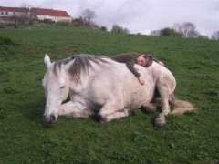 Cavallo2.jpg
